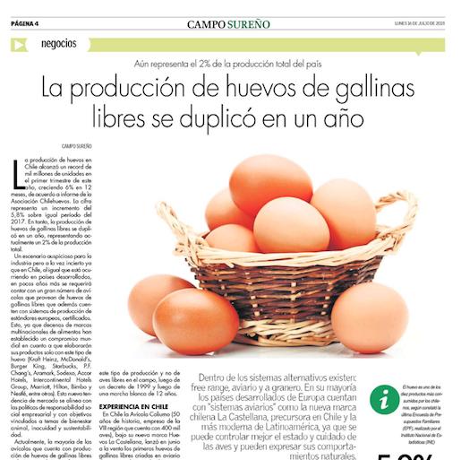 La Castellana: Producción de huevos de gallinas libres se duplicó en un año